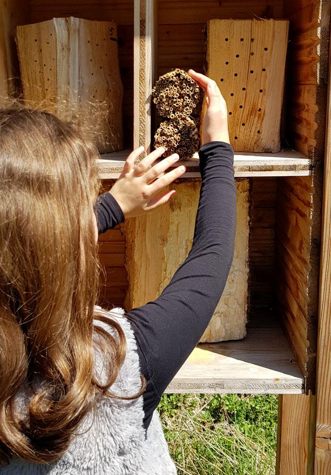 Nachschub für die Insektenhotels von AITRACH BRUMMT.