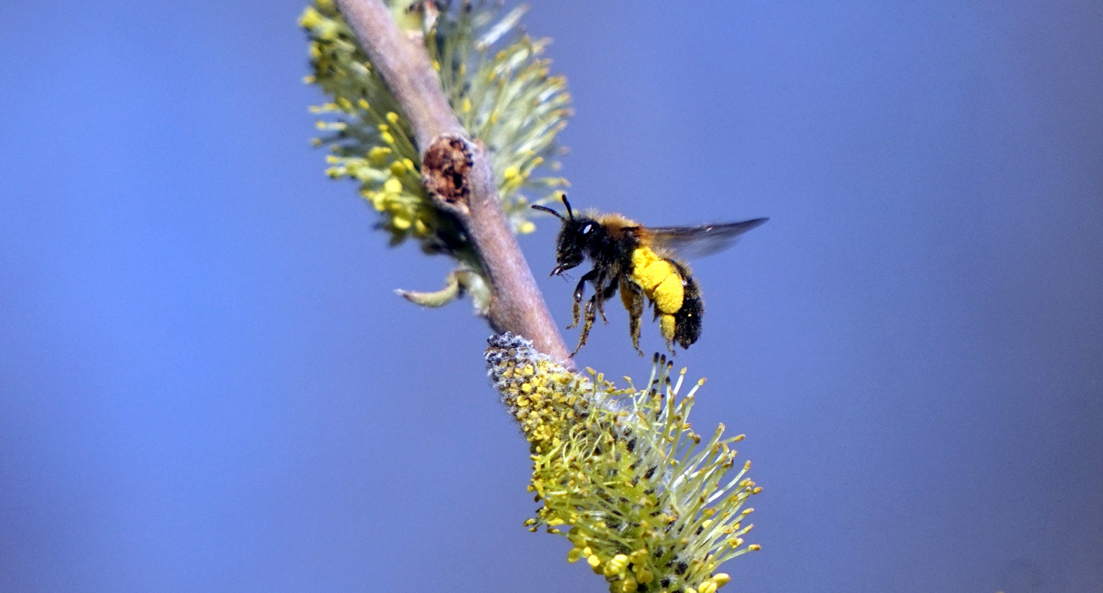 Mit Blumen, Kräutern und Gräsern gegen das Insektensterben